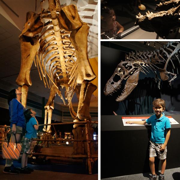 argentinosaurus-tyrannosaurus-