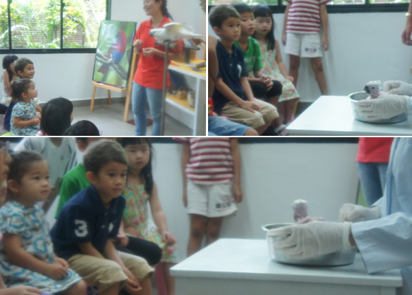 education-kids-ornithology-care-breeding-research-singapore