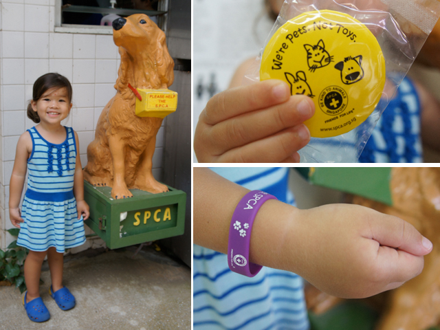 Support the SPCA!