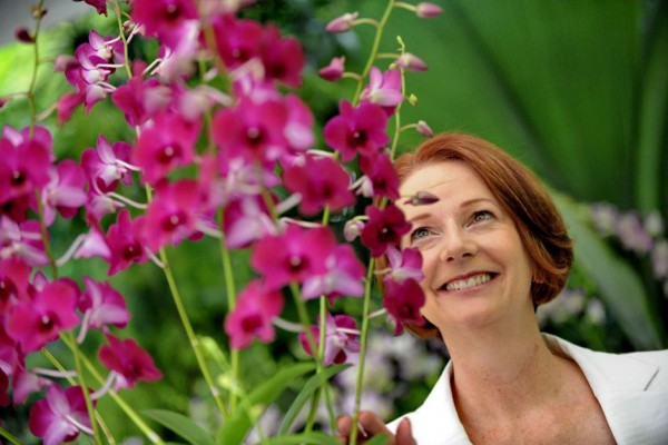 Dendrobium Julia Gillard (Picture credit: ABC News)