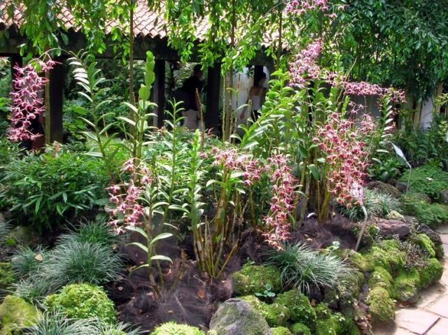Dendrobium Margaret Thatcher.  Note the Curliques. Source: The Orchid Garden