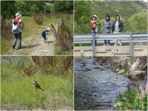 cardrona-walk-wildlife-bird-bridge